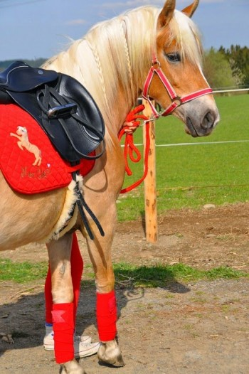 ♥HOTTEschoen♥ Embroidery-File SET Horses PONY incl. ITH