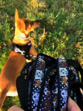 ♥WUFFz♥ RIBBON Dogs VICHY checked BLACK Price per METER