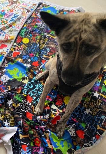 ♥WUFFz on GRAFFITISCHÖN♥ 0.5m JERSEY Hunde DARK